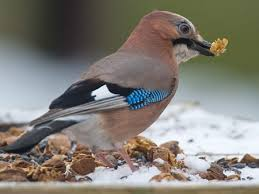 Bildergebnis für Vögel futtern