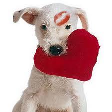 cute animal valentines day wallpaper. Modren Valentines Valentines For U003e Cute Animal Day Wallpaper To M