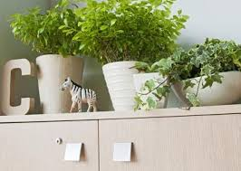 plants for office cubicle. English Ivy Plants For Office Cubicle E