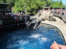 The Vancouver Aquarium Torn Between The Good And The Bad Karen