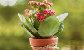 order plants online. Order Plants Online For Delivery