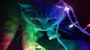 rainbow animal wallpaper. Beautiful Wallpaper HD Wallpaper  Background Image ID470094 1366x768 Animal Cat In Rainbow N