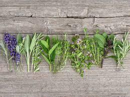 Kidney Patient Diet Chart In Telugu World Kidney Day Traditional Remedy Herbs Like Punarnava