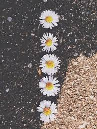hipster flower wallpaper tumblr. Unique Tumblr Daisy Walk Ways With Hipster Flower Wallpaper Tumblr