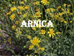 Image result for arnica