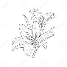 2 つのユリ花帳手描きベクトル シンプルなスタイルのイラストを着色するためのモノクロ図面