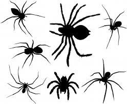 """Résultat de recherche d'images pour """"araignée"""""""