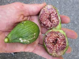 6 Types Of Figs To Try Right Now Food Republic