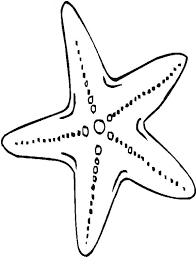 Small Picture Starfish Coloring Pages GetColoringPagescom