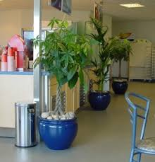 Tropical office plants 70s Interior Plants And Modern Architectural Designs Go Handinhand The People Who Do The Internal Decoration Of Buildings Understand That All Rooms Are 123rfcom Blog Interior Office Plants Part