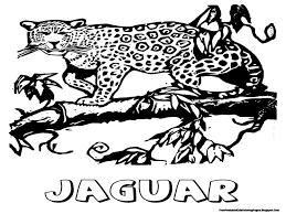 Small Picture Coloring Pages Exquisite Jaguar Coloring Page Letter J Is For