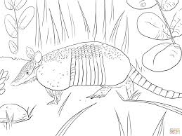 Small Picture Nine Banded Armadillo coloring page Free Printable Coloring Pages