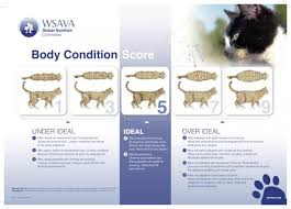 Overweight Cat Chart Is My Cat Overweight Chart How To Detect Cat Obesity