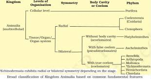 Biological Classification Flow Chart Classification Of