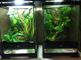 hatchlings crested gecko tanks