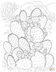 Small Picture Prickly Pear Cactus coloring page Free Printable Coloring Pages