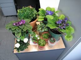 Office gardening Urban The Office Environment Is Very Conducive For Growing These Beautiful Plants With Big Windows And Great Morning Sun The Long Hours Of Aircon Brings The Dream Grow It Wordpresscom Office Gardening Dream Grow It