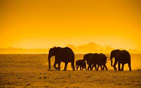 background images animals. Brilliant Background African Animals Wallpaper Background Throughout Background Images Animals