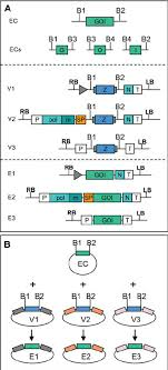 Subcloning Primer Design Model For Subcloning Of A Gene Of Interest Into A Library Of