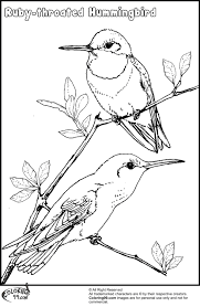 Small Picture Ruby Throated Hummingbird Coloring Pages Hummingbird Coloring