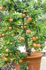 91 Best Container Garden Flowers And Foliage Images On Pinterest Container Garden Ideas For Shade