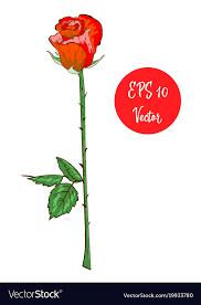 single red rose flower beautiful