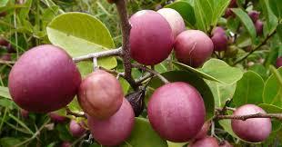 Jamaican Fruit And Food Trees  FlickrJamaican Fruit Trees
