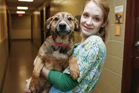 petsmart animals dogs. Delighful Animals PetSmart Charities Funds Successful Programs With Petsmart Animals Dogs I