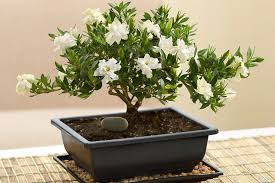 feng shui plant office. Feng-shui-office-space Feng Shui Plant Office N