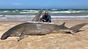 great hammerhead shark caught. Beautiful Hammerhead Texas Fisherman Reels In Massive 14Foot Hammerhead Shark  The Weather  Channel Inside Great Caught