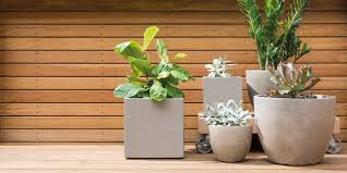 7 best pot plants for your garden and home