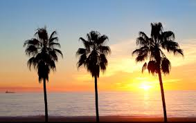 palm trees sunset tumblr. Palms, Summer, And Sun Image Palm Trees Sunset Tumblr C