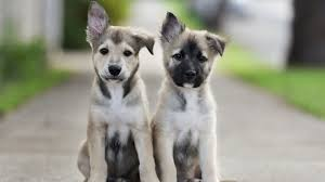 cute puppy dogs wallpapers