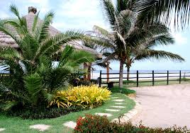 Small Picture front garden ideas tropical oyster plants around palm garden
