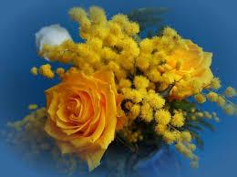 Risultati immagini per mimose