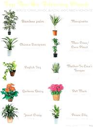 common house plants names types of indoor plants types of indoor plants common indoor plants in