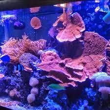 Fun Fish Tank Decorations Leopazzo Tv Youtube
