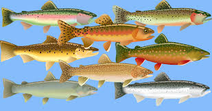 Trout Of North America The Complete Guide