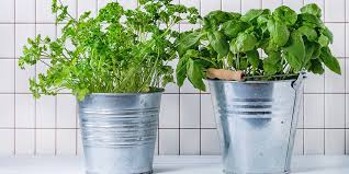 herbs are one of the most rewarding plants to grow but you don t need a big garden to reap the tasty benefits all you need is a sunny window or two and