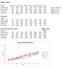 Labrador Retriever Puppy Weight Chart Golden Retriever Puppy Growth Chart Pictures