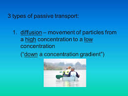 3 Types Of Passive Transport Cell Transport Ppt Video Online Download