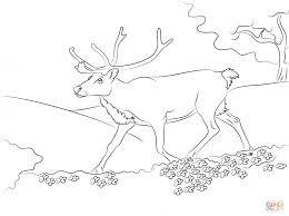 Small Picture Coloring Pages Svalbard Reindeer Coloring Page Free Printable