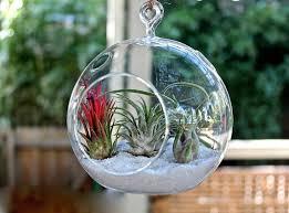 decorating inspiring diy hanging terrarium with glass globe and pebble hanging cactus terrarium