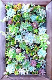 t9620 fabulous garden wall decor succulents wall decor best succulent wall planter ideas on garden wall i7356 elegant garden wall