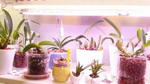 Growing Orchids Under Led Lights My Orchid Lighting Set Ups Indoor Lighting For Different Orchids Gemma Led Grow Lights