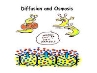 Diffusion And Osmosis Venn Diagram Yr9 Topic 3 Cellular Movement Amazing World Of Science
