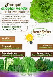 Por Qu Debes Consumir Vegetales De Hoja Verde Dra Coc Cuales Son Los Colores Vegetales L