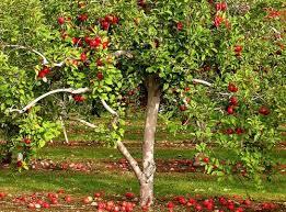 My Meditations On Scripture Bearing Good FruitTree Bearing Fruit