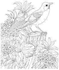 Magnifique Petit Oiseau Dans La Nature Compos E De Jolies Fleurs