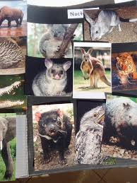 diurnal animals list for kids.  List And Diurnal Animals List For Kids A